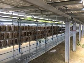 「登米善王寺太陽光発電所」でのキクラゲ菌床栽培の様子