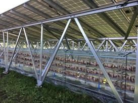 「加美八幡堂太陽光発電所」でのキクラゲ菌床栽培の様子